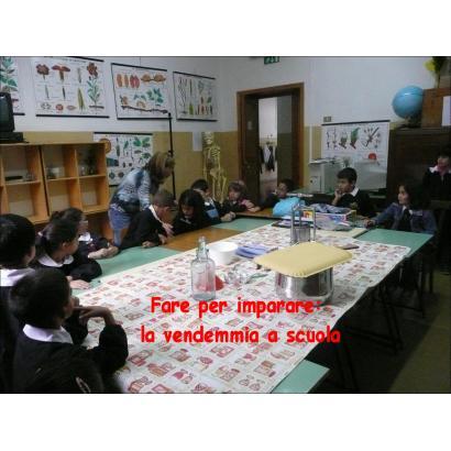 Fare per imparare: la vendemmia a scuola
